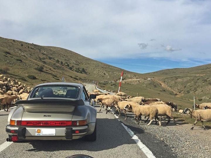 sheep porsche