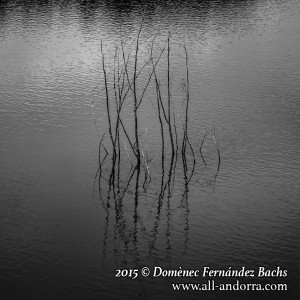 Domènec Fernández Bachs_5