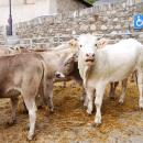 Cattle fair, Canillo – Andorra, 16.10.2016