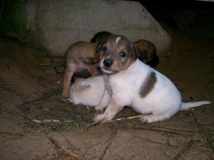 homeless_animals_andorra