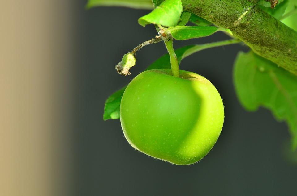 Effets curatifs des pommes