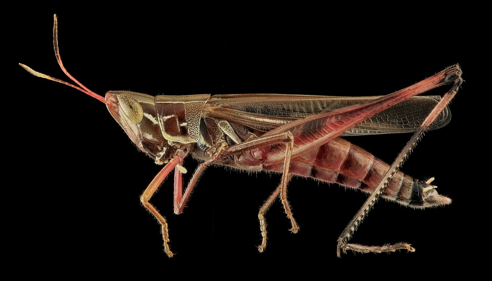 Menjar insectes: és absurd o és el futur?