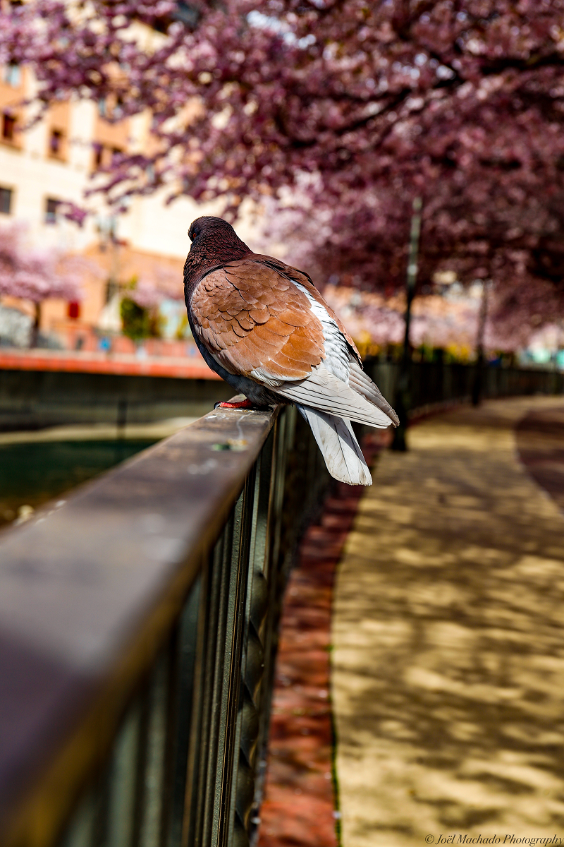 голубка весна парк