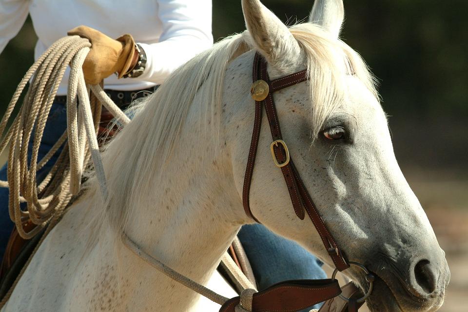 Этим летом в Андорре организованы регулярные пешие и конные экскурсии по горам и заповедникам