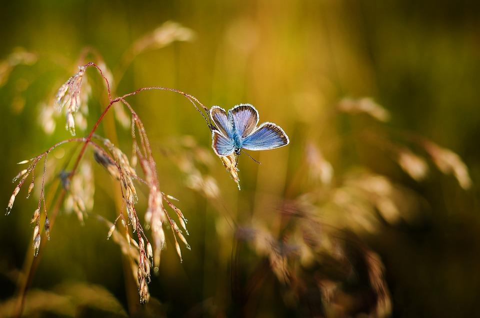 """24 августа в Сео-де-Уржель пройдёт семинар по изучению птиц и бабочек """"Летать - одно удовольствие"""""""