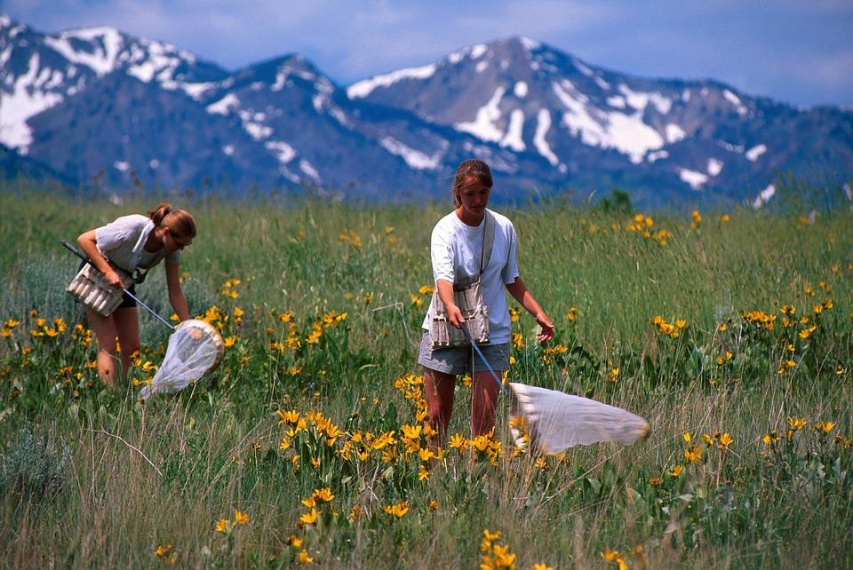 7 июля в долине Андорры Валь-де-Сольдеу пройдёт семинар под открытым небом по изучению бабочек