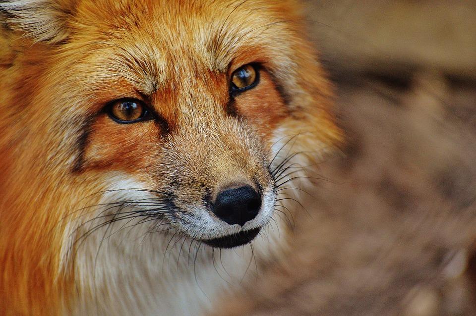 Rencontre transfrontalière pour approfondir la gestion de la faune