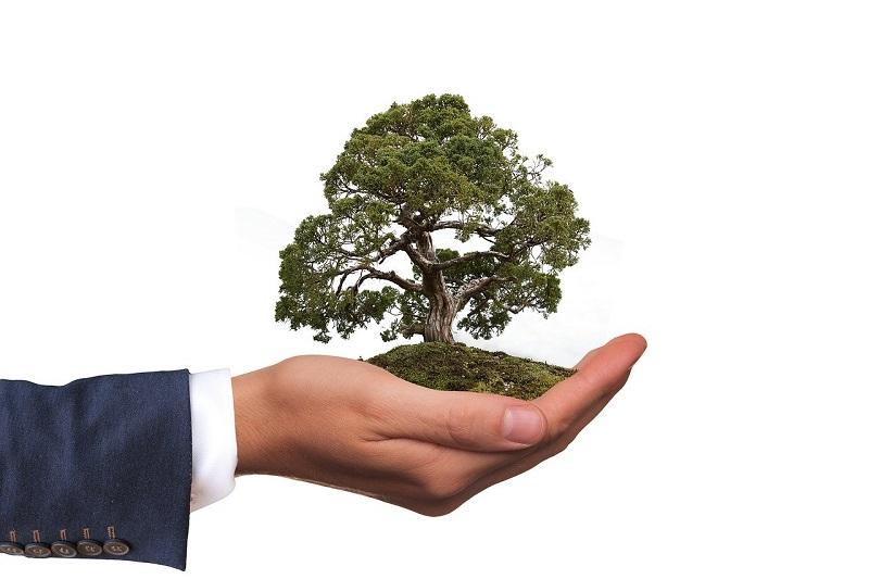 Le Projet Boscos de Muntanya, principal organisme de bénévolat pour l'environnement en Catalogne, a réuni 546 volontaires