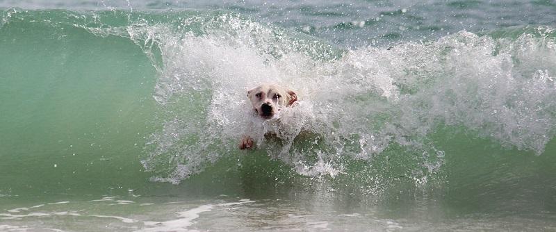 Барселона открыла пляж для собак