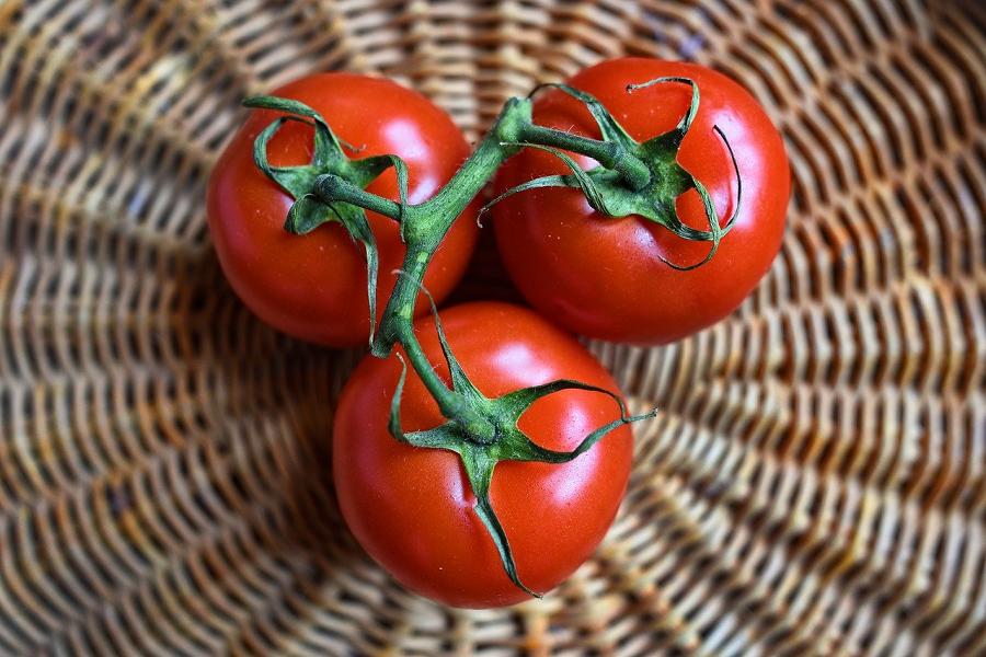 Праздник помидоров пройдёт в Каталонии в конце июля