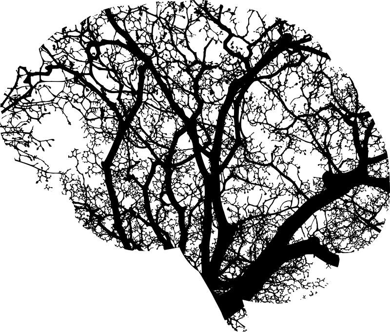 Учёные Бильбао нашли новый возможный способ лечения болезни Паркинсона