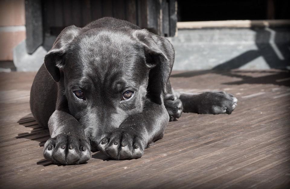 Барселона наложила санкции на некоторые питомники за незаконные действия с животными